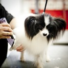 san jose dog grooming