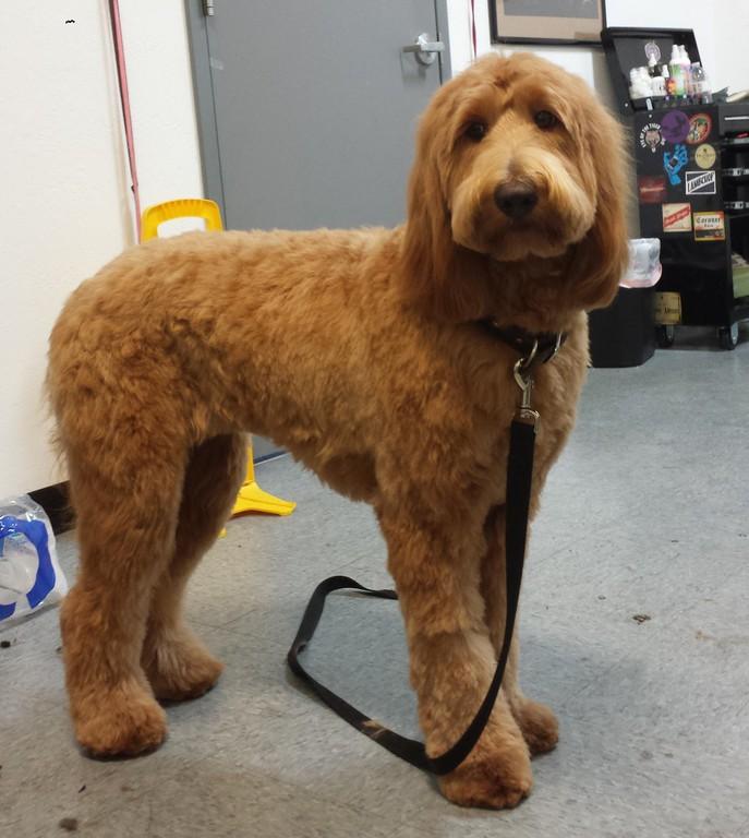 Dog Grooming San Jose