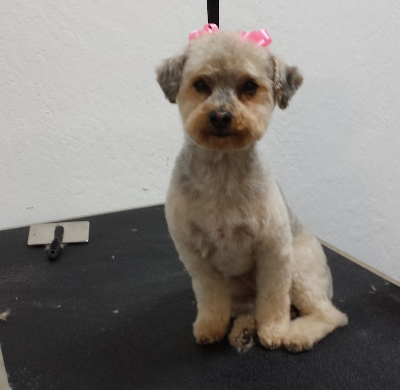 Kens Dog Grooming Salon In San Jose Ca