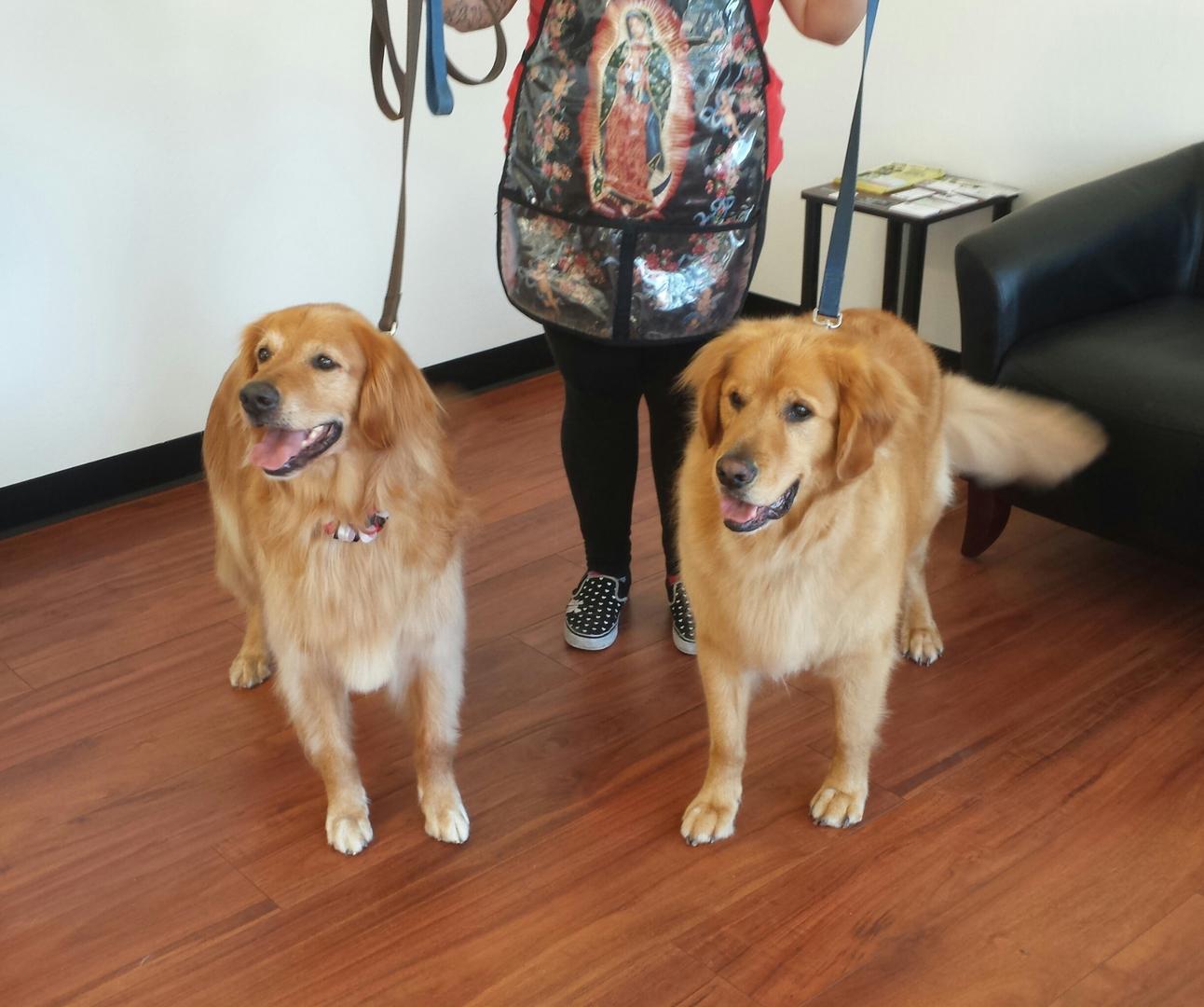 Furry Friends Dog Grooming San Jose